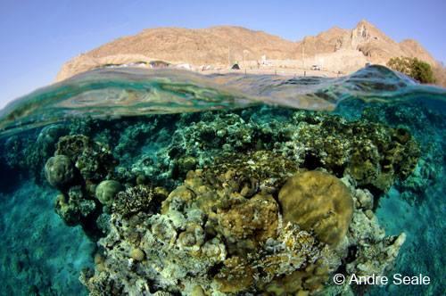 coral de Eilat