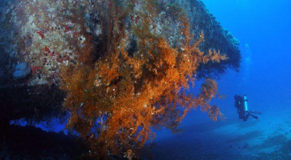 Sexta Sub: mergulho em Aqaba, Jordânia