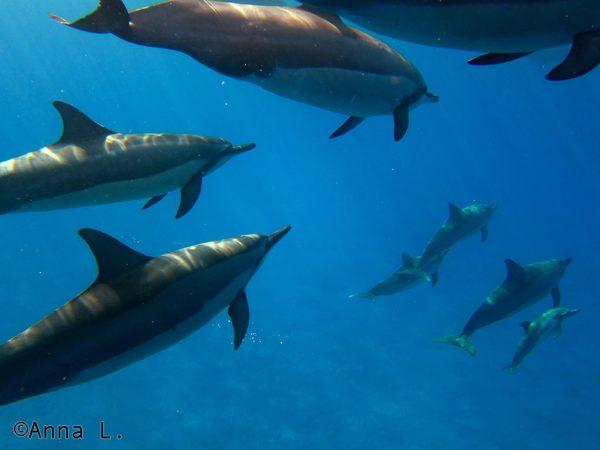 15 dias no Havaí da Anna - golfinhos