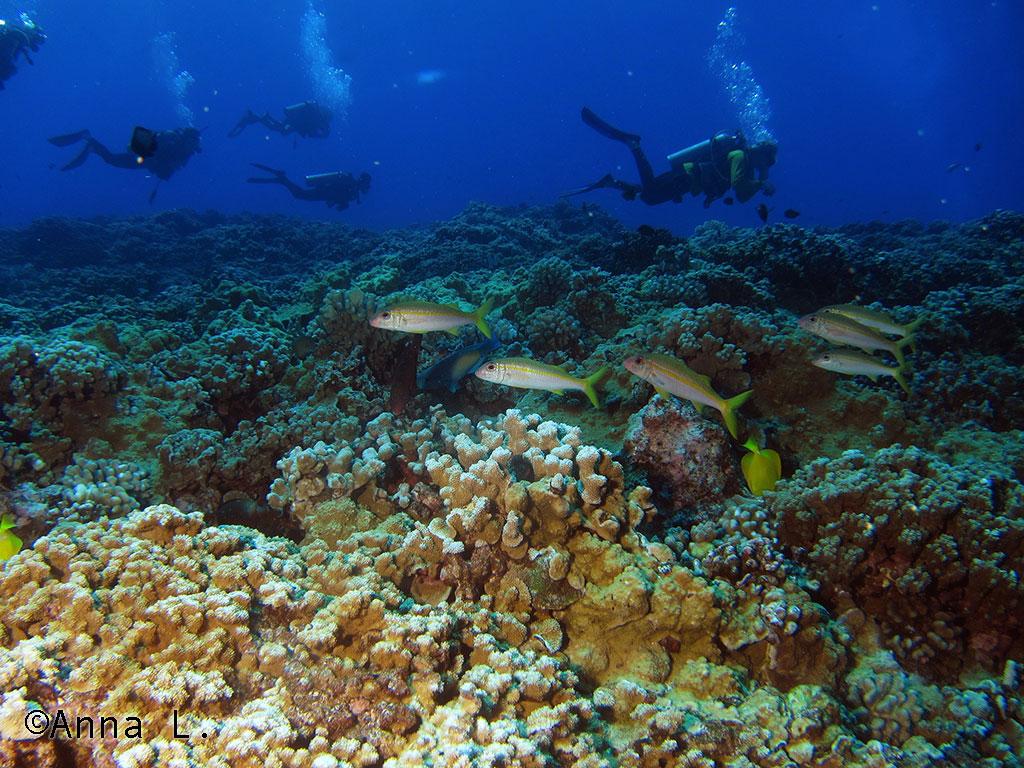 Mergulho em Molokini - Maui