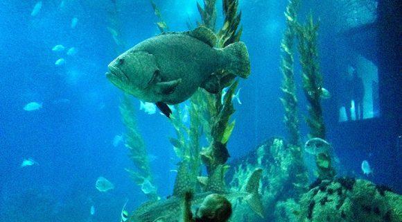 Oceanário de Lisboa – o melhor aquário do mundo