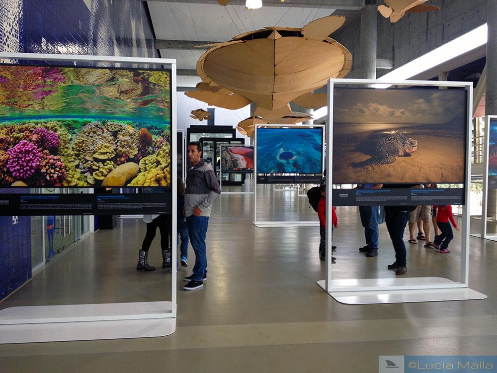 Exposição fotográfica - Oceanário de Lisboa - Portugal