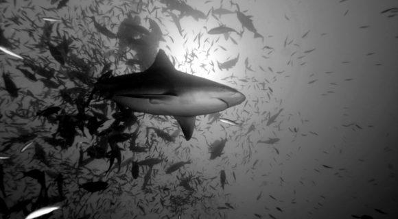 Minhas top 5 viagens com tubarões