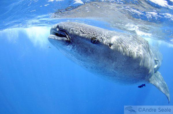 Minhas top 5 viagens com tubarões - México