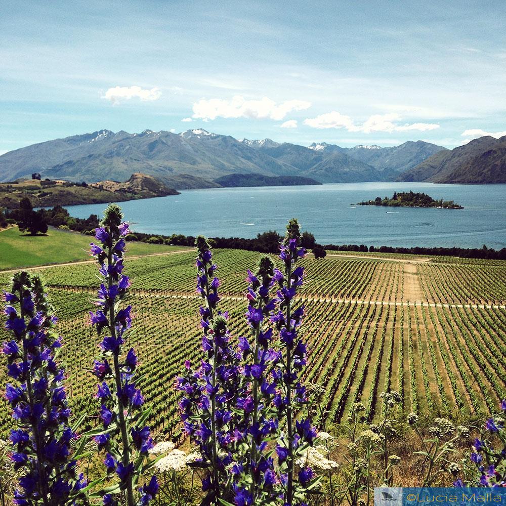 Vinícola Rippon - Wanaka - Ilha Sul - Roteiro Nova Zelândia em 12 dias