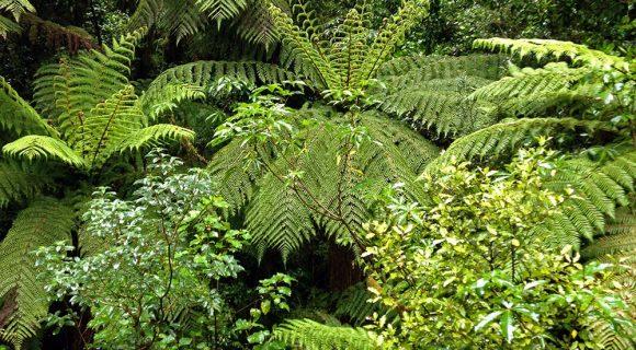 Nova Zelândia em 12 dias – Parte 1: Queenstown, Fiordland e Wanaka