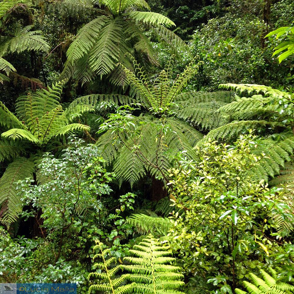 Samambaias - Queenstown - Nova Zelândia