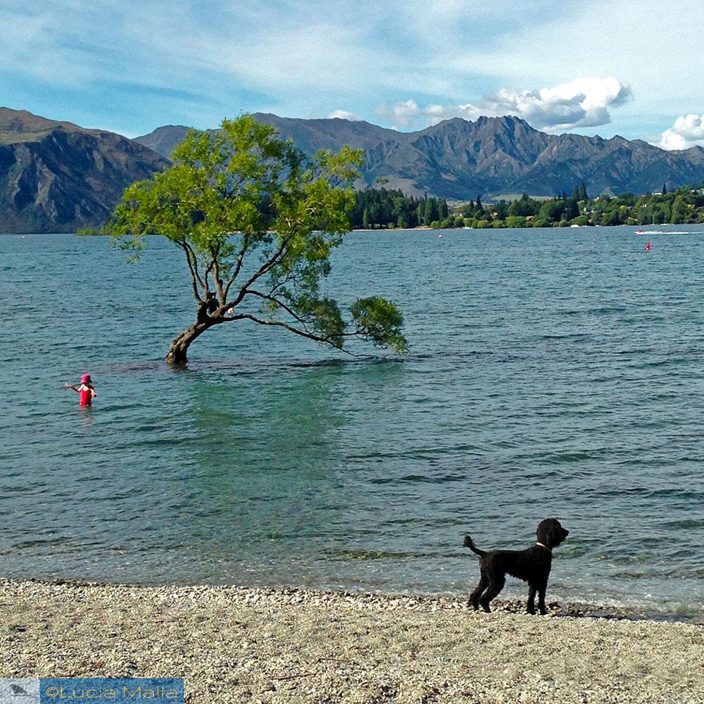 That Wanaka Tree - Roteiro Nova Zelândia em 12 dias
