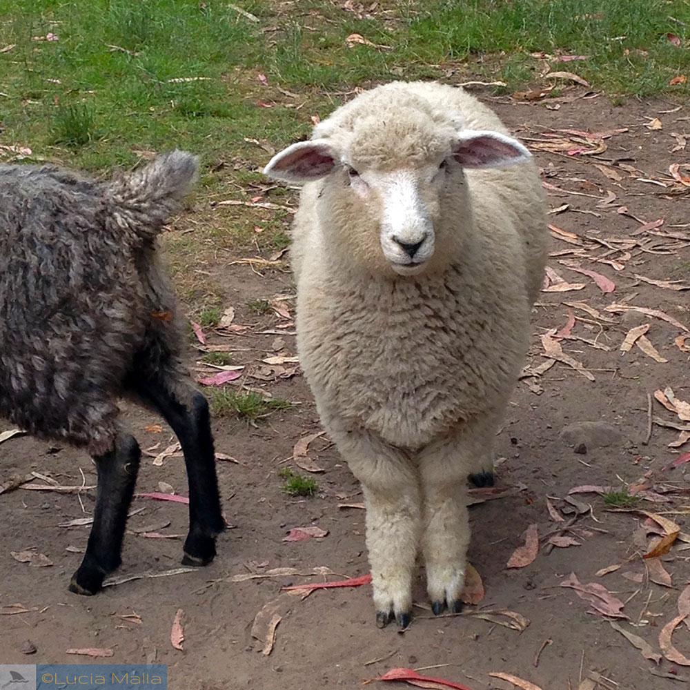 Animal Farm - Kaikoura - Roteiro Nova Zelândia em 12 dias