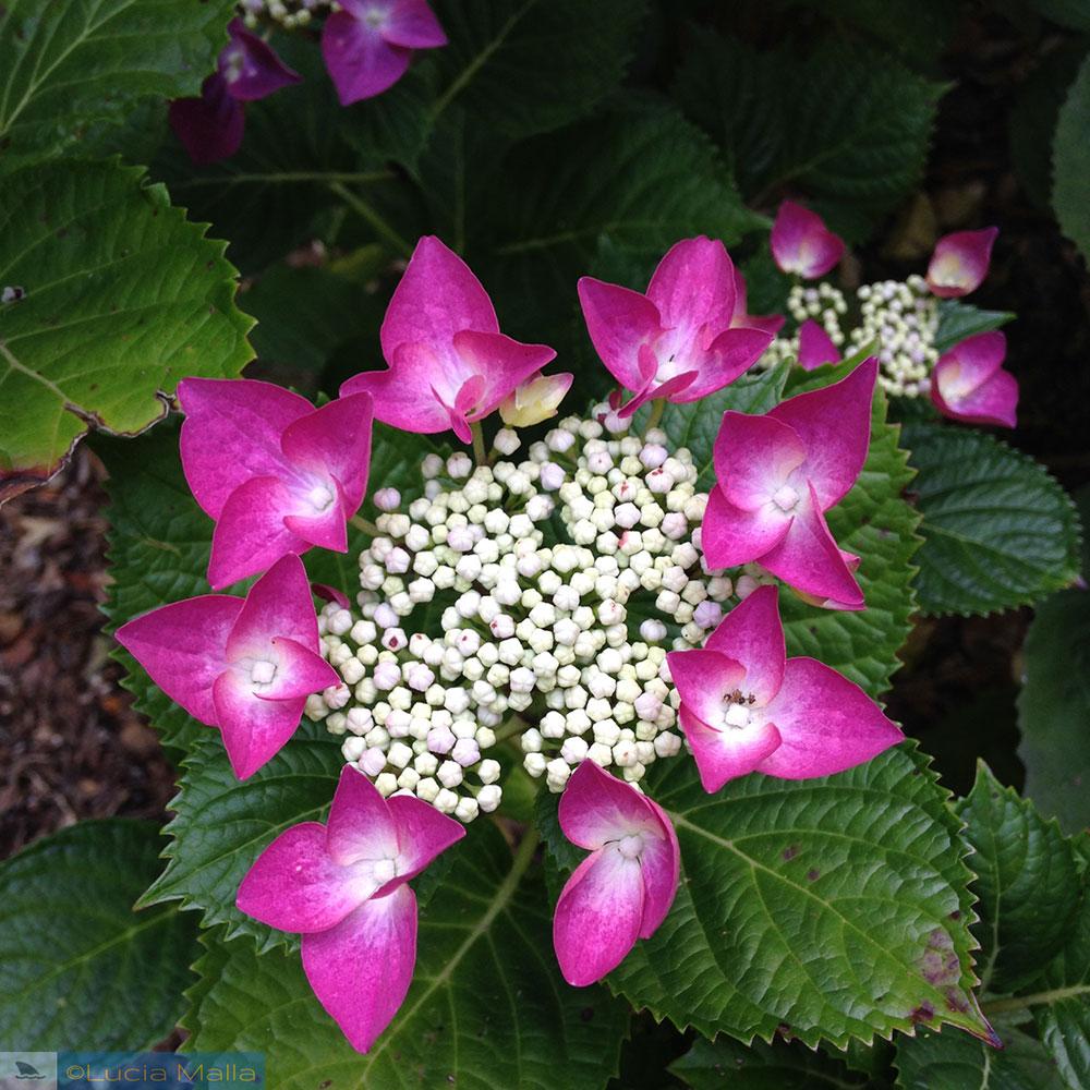 Flor - Jardim Botânico de Wellington - Ilha Norte