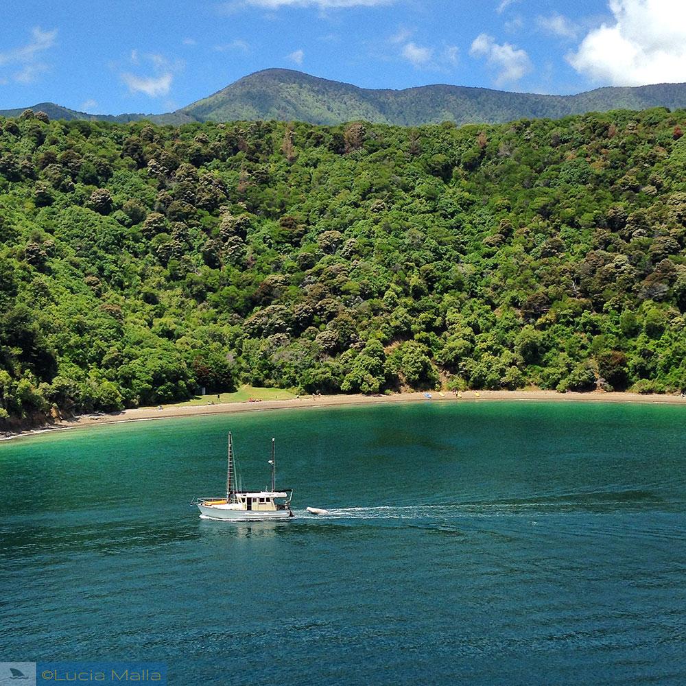 Roteiro Nova Zelândia em 12 dias - Travessia para Wellington e Rotorua