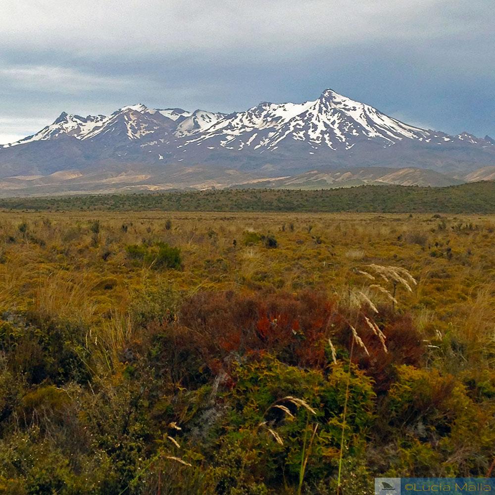 Parque Nacional de Tongariro - Ilha Norte - entre Wellington e Rotorua