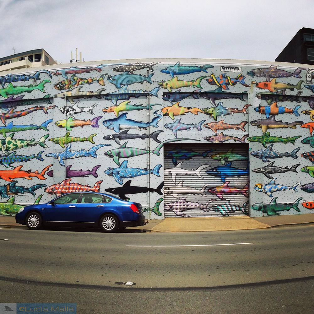 Shark Wall - Wellington - Ilha Norte