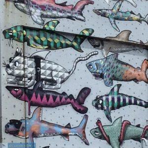 Shark Wall - Wellington e Rotorua - Ilha Norte