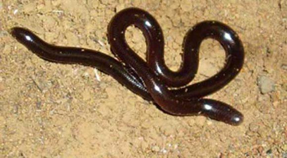 Entre cobras e lagartos no Havaí