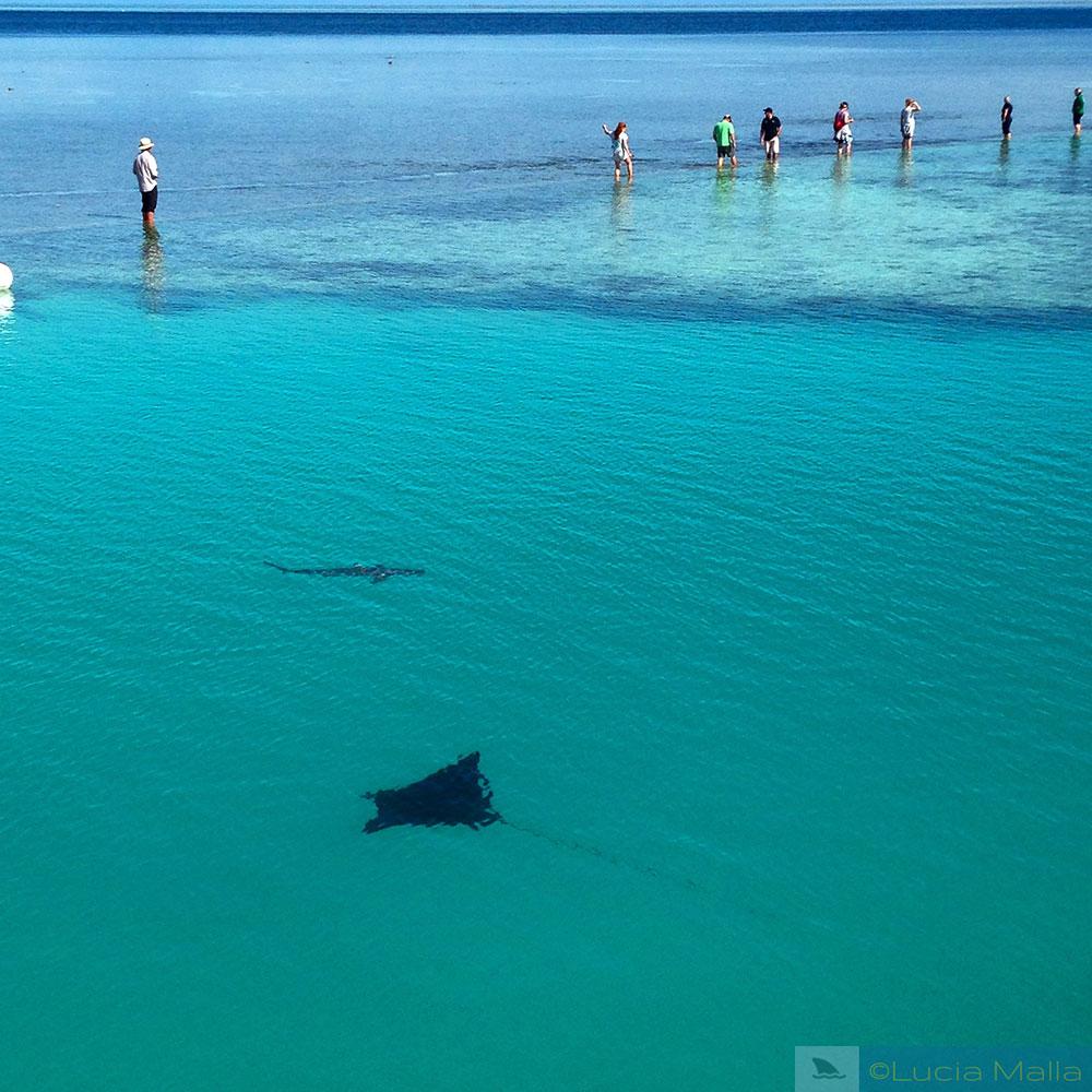 Paradise is Heron Island