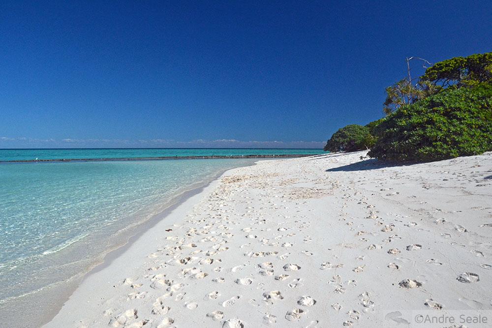Shark Bay - Heron Island - Austrália