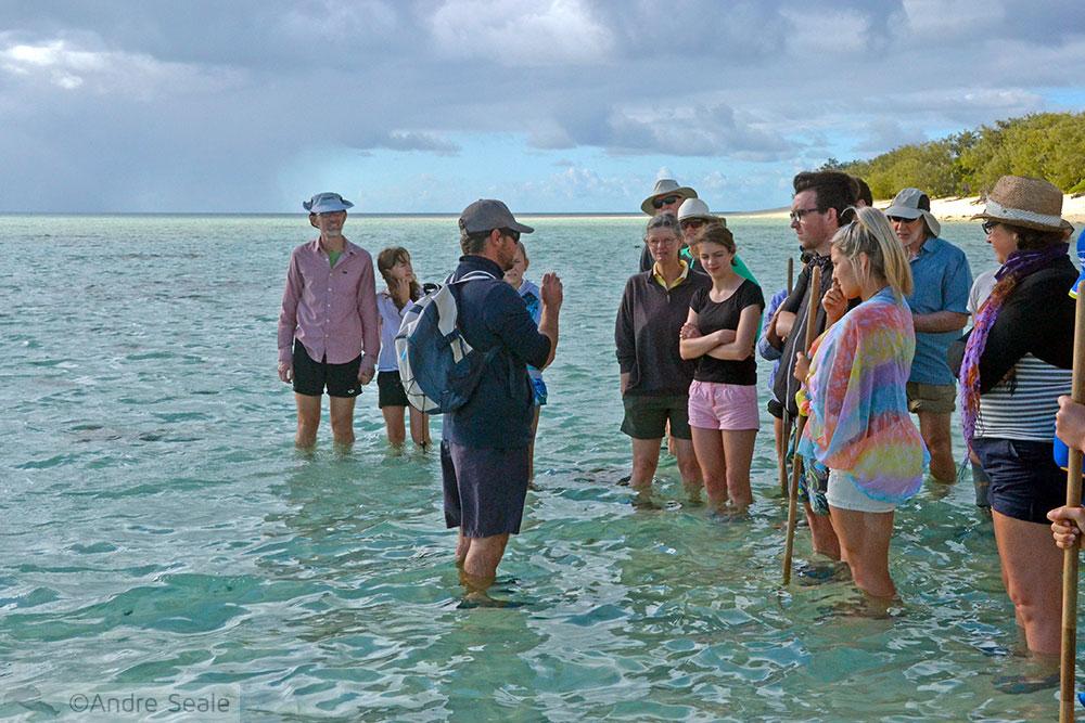 Caminhada guiada pelo recife de corais - Heron Island