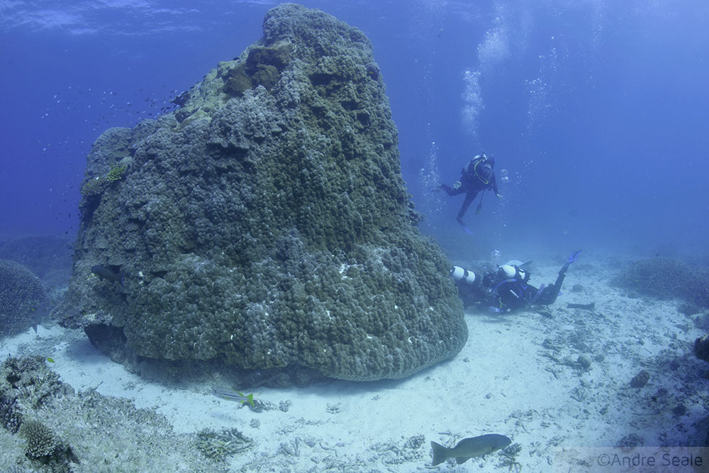 Heron Bommie - mergulho em Heron Island