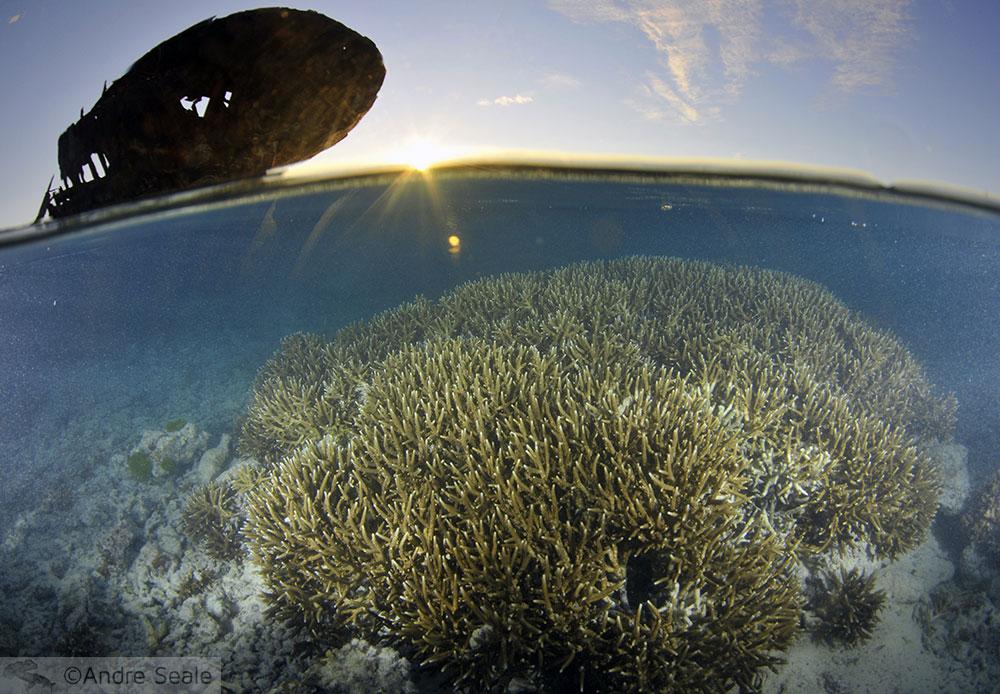 Coral ao entardecer - Heron Island