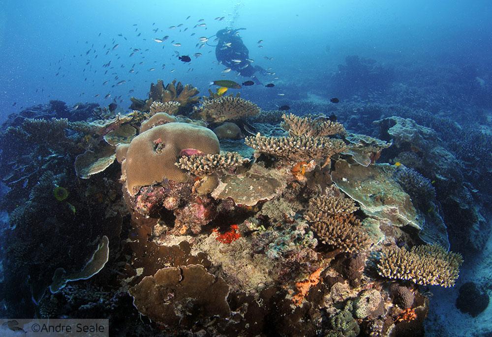 Grande Barreira de Corais na Austrália - Heron Island