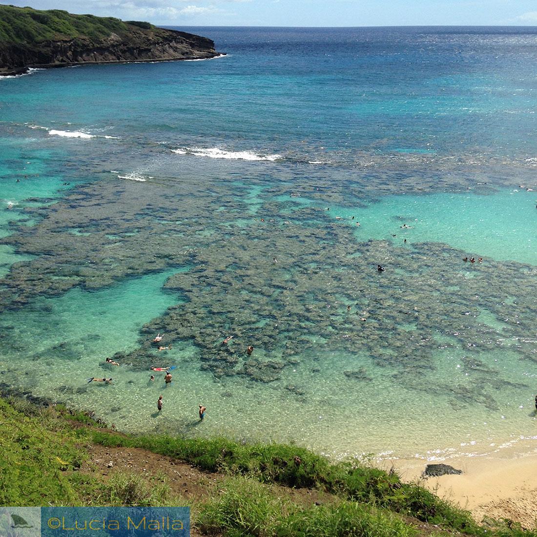 Recifes de corais de Hanauma Bay