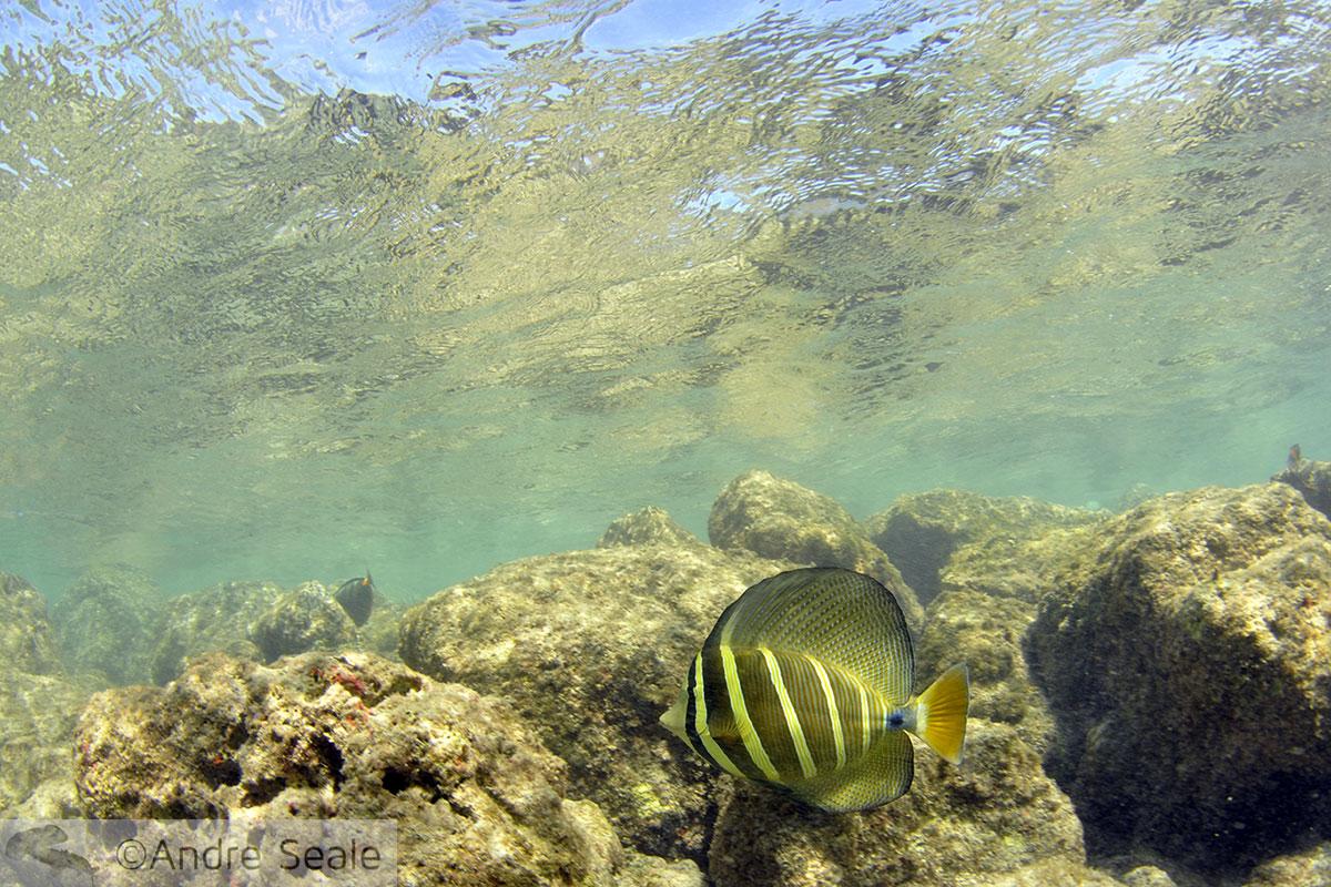 Peixe em snorkel em Hanauma Bay
