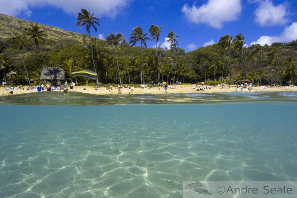 Praia de Hanauma Bay - Oahu - Havaí