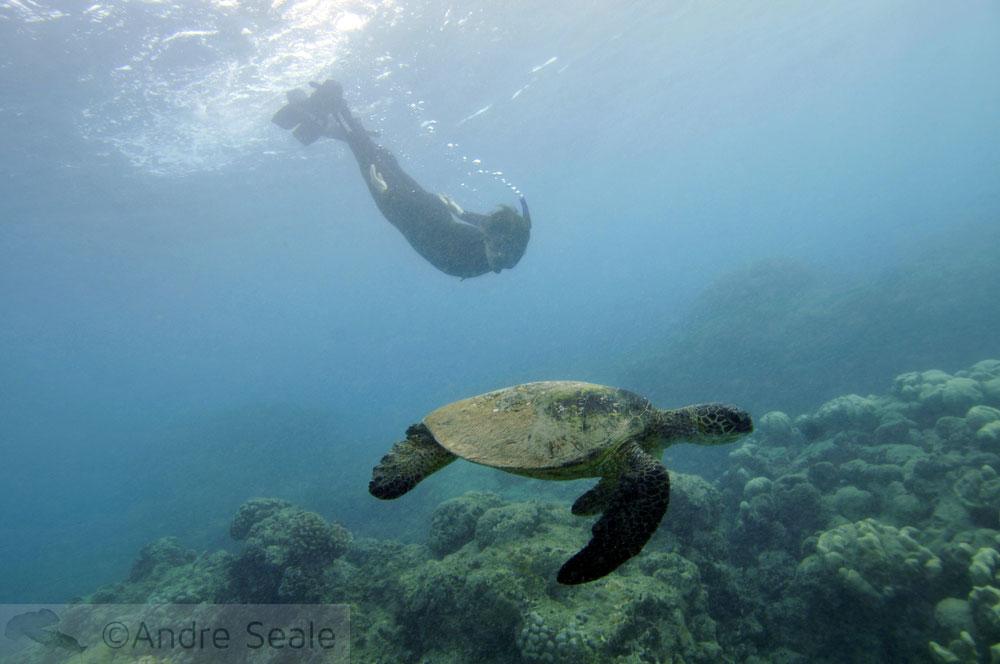 Snorkel em Hanauma Bay - tartaruga marinha
