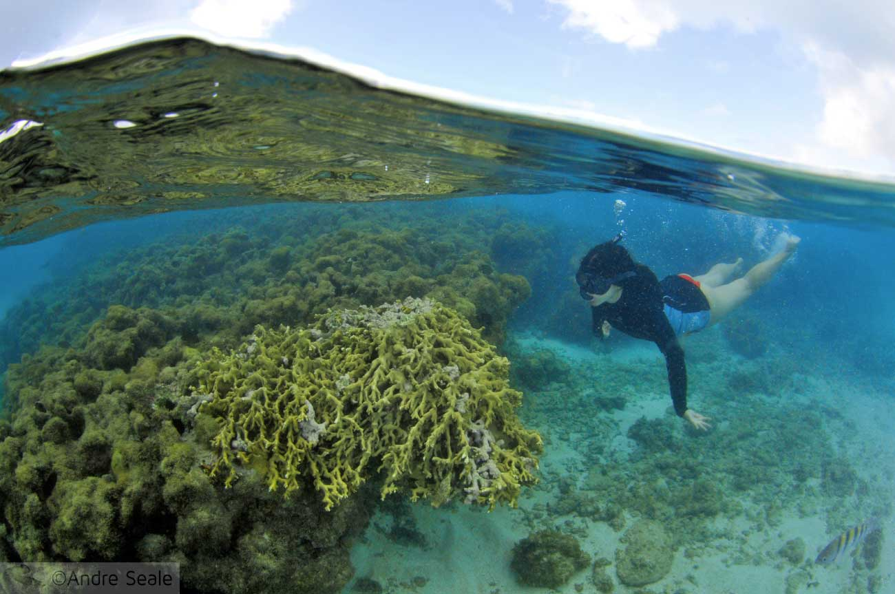 Momentos de 2016 - Snorkel em Maragogi - Alagoas