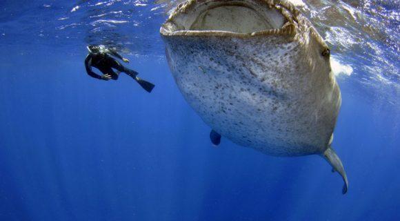Sexta Sub: a sustentabilidade do mergulho com tubarões