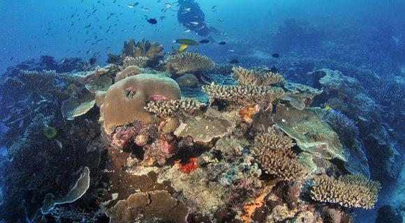 Sexta Sub: o stress dos corais da Austrália