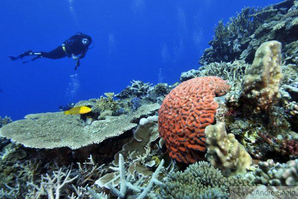 Chasing Coral na Nova Caledônia