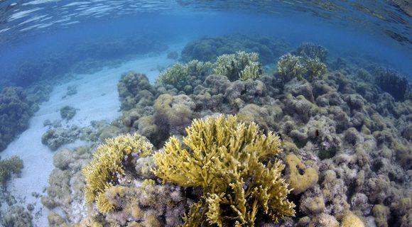 Sexta Sub: os corais (mortos) de Maragogi