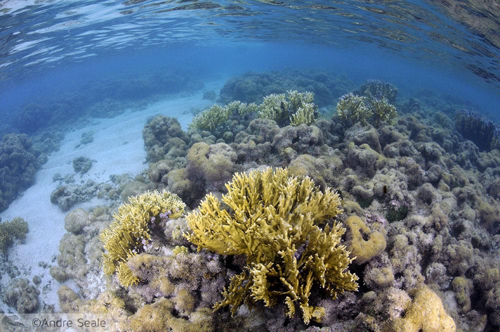 Corais de Maragogi - Galés - Alagoas
