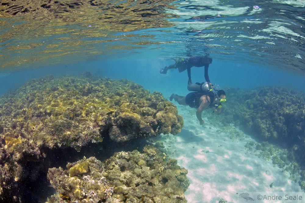 Scuba entre os corais de Maragogi