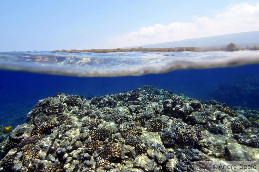 Recife de coral no Havaí