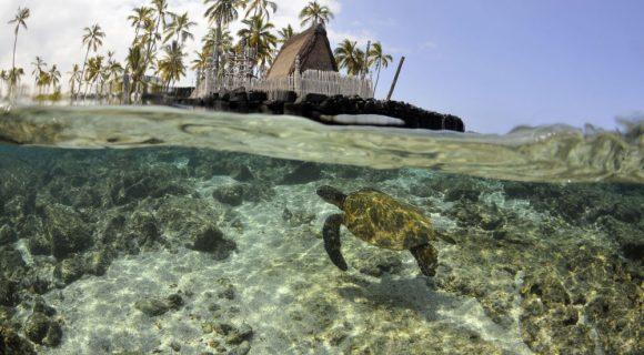 Sexta Sub: snorkel em Honaunau Bay, Big Island