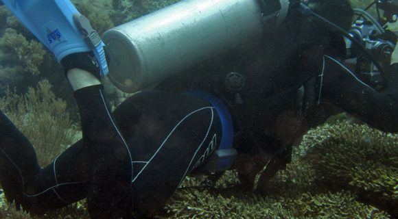 Sexta Sub: como NÃO fotografar um coral