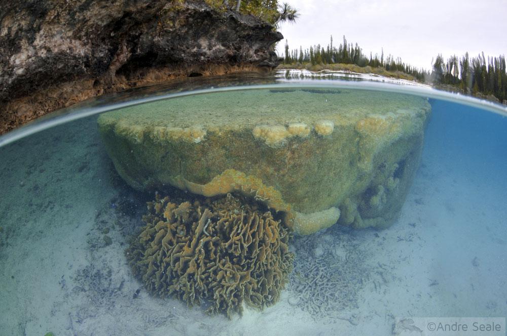 Snorkel no Aquário Natural da île des Pins - Nova Caledônia