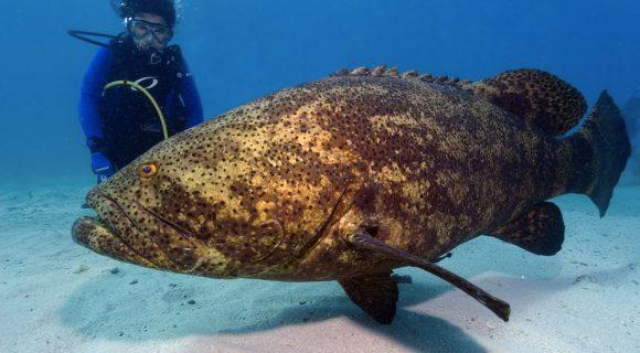 Sexta Sub: Dia das Espécies Ameaçadas de Extinção