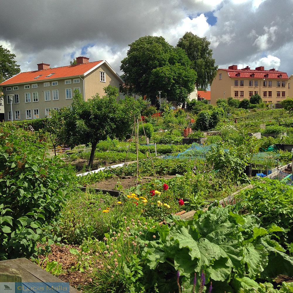 Horta comunitária - Gotemburgo