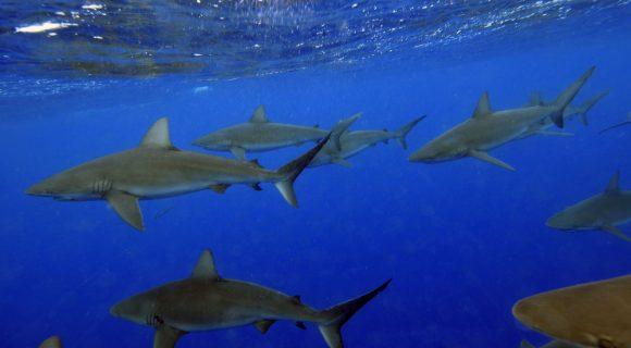 Sexta Sub: Shark Week 2017
