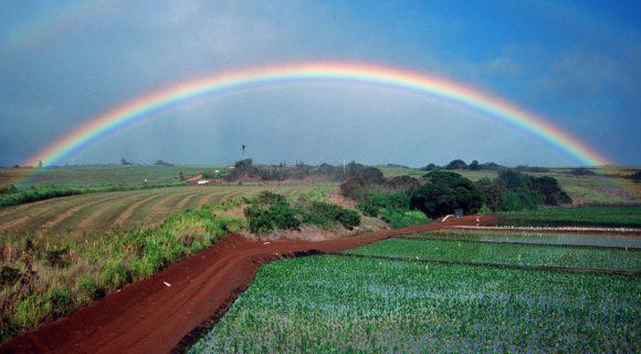 Havaí – o estado do arco-íris
