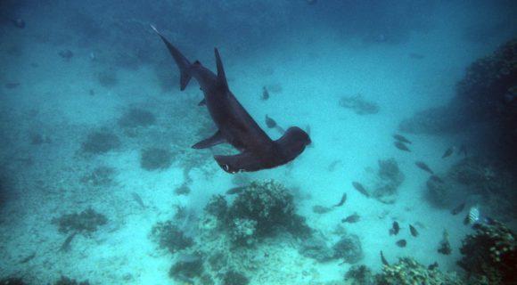 Sexta Sub: toda semana é do tubarão