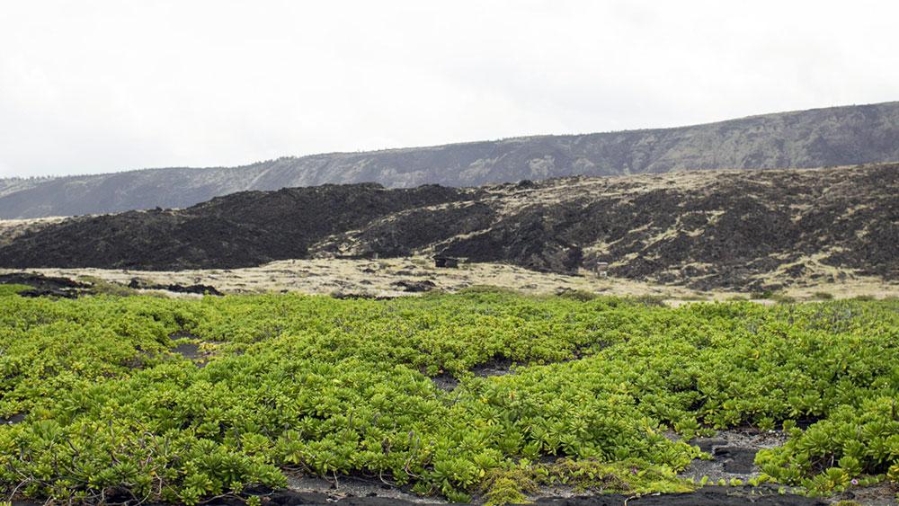 Trilha de Ka'aha - Big Island - Havaí