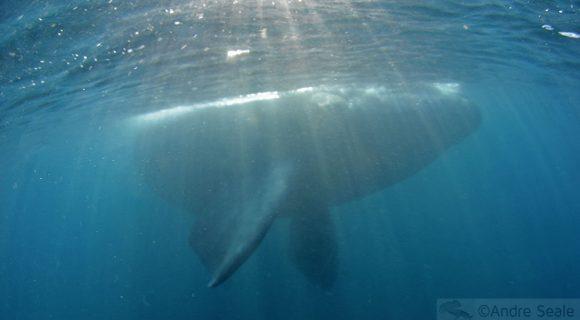 Sexta Sub: Sombra de Baleia