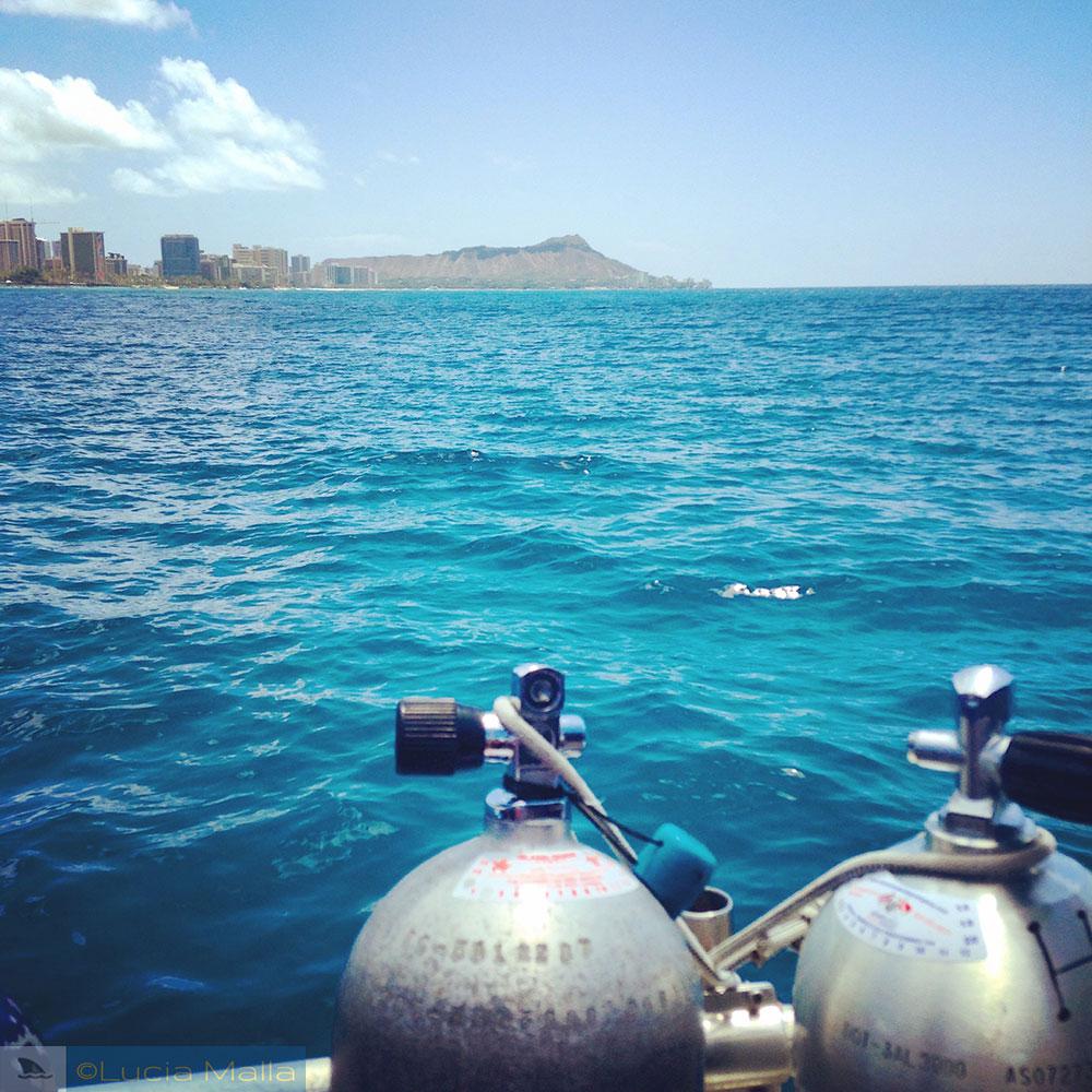 Mergulho no Havaí - melhor época