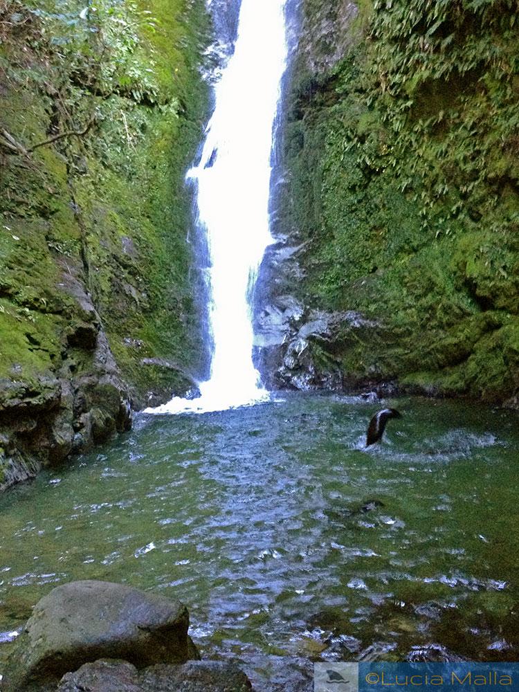 Cachoeira de Ohau com lobos marinhos de Kaikoura