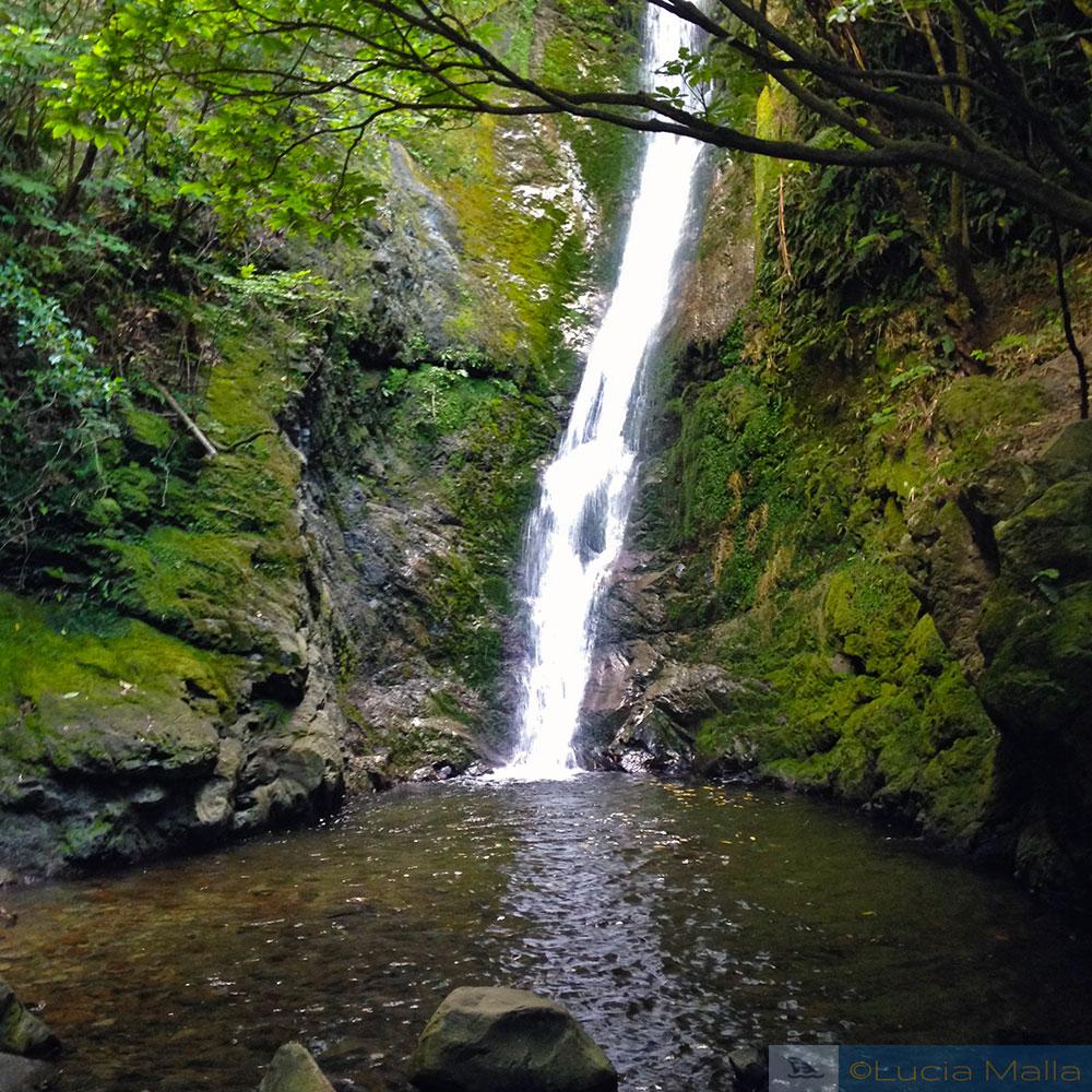Cachoeira de Ohau - Lobos marinhos de Kaikoura